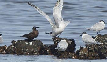 Benefits of birding